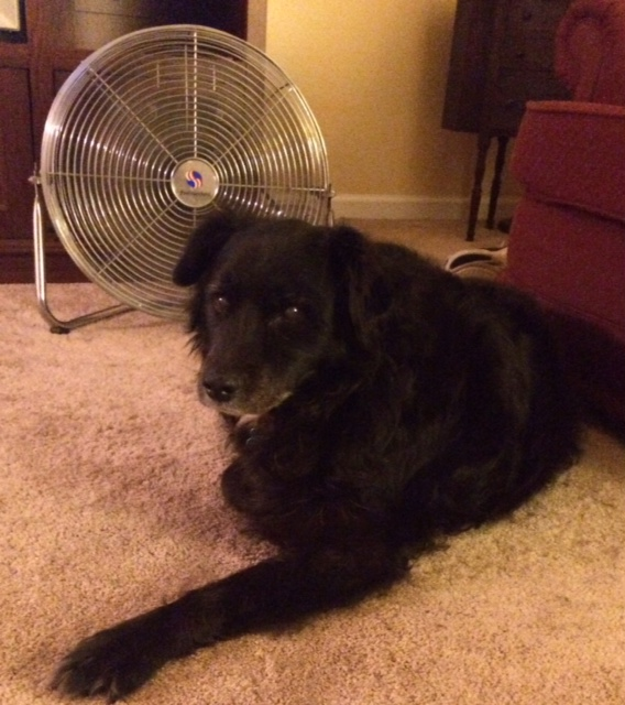 Maggie and her fan.